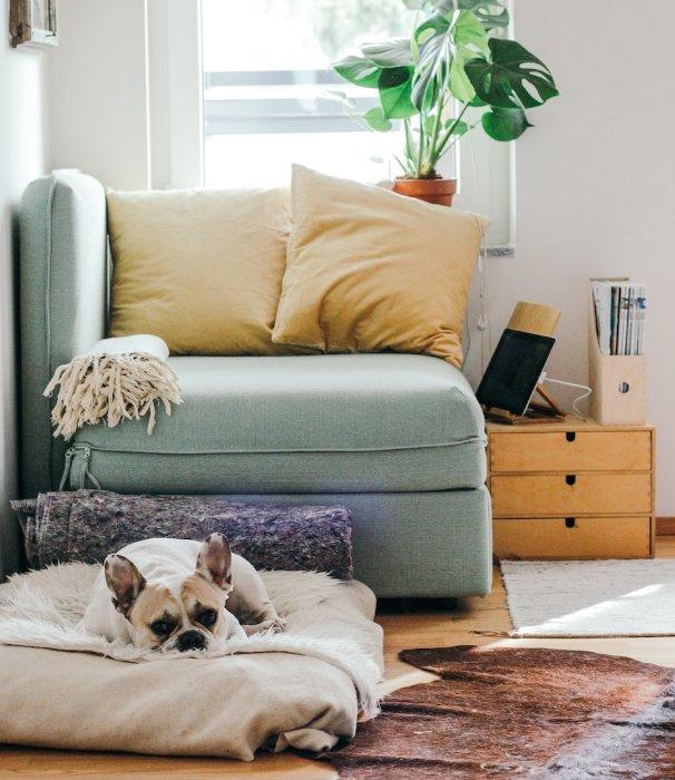 5 Möglichkeiten, Ihrem Haus etwas Gutes zu tun
